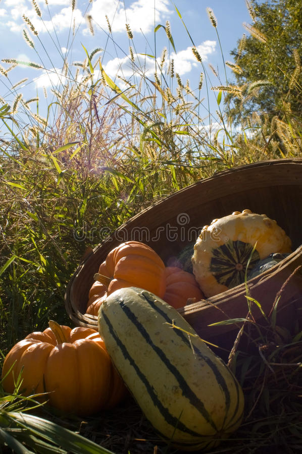 Basket Of Gourds Royalty Free Stock Photo