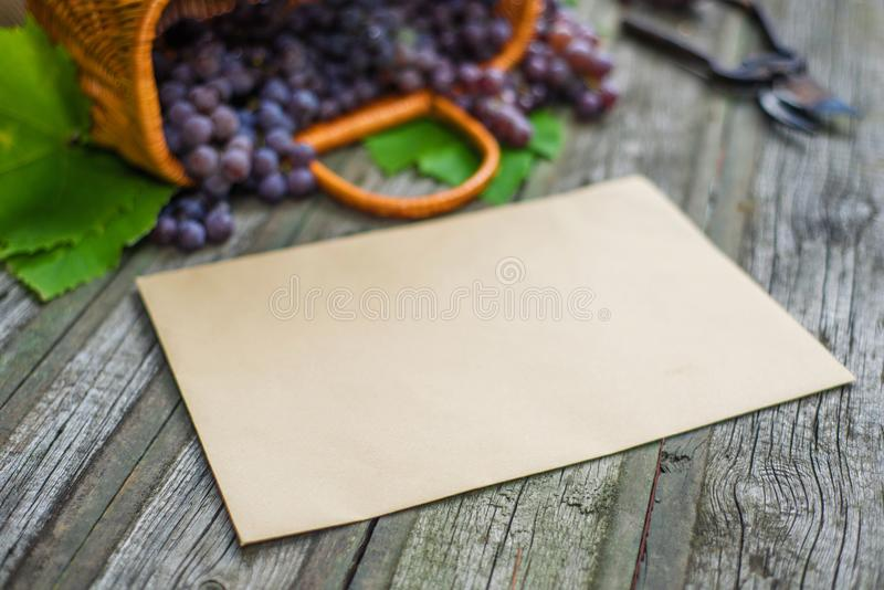 Basket with grapes beside secateurs on vintage rustic wooden table. Closeup Old paper template in centre wine making. Mock up stock photos