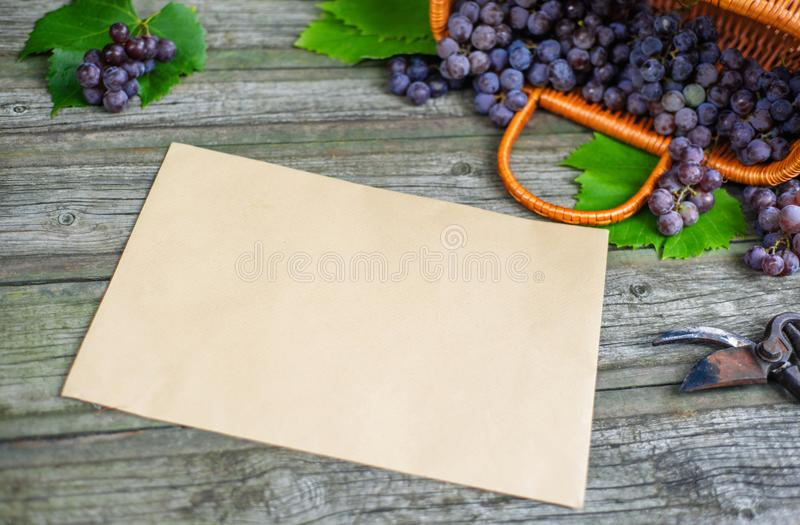Basket with grapes beside secateurs on vintage rustic wooden table. Top view. Old horizontal paper template in centre wine making. Mock up royalty free stock images