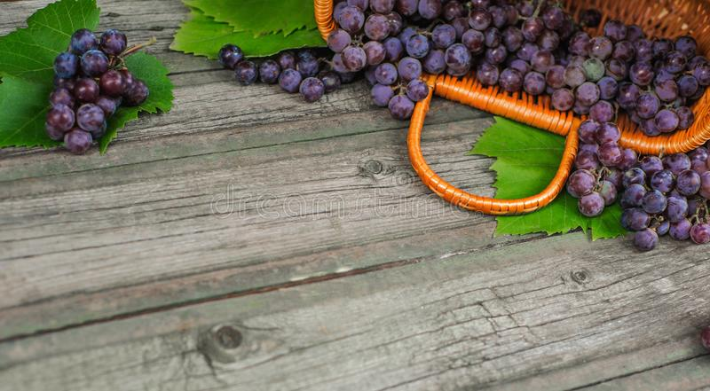 Basket with grapes on vintage rustic wooden table. Wine making. Background stock photo