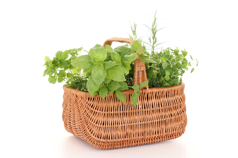 Basket of herbs royalty free stock image