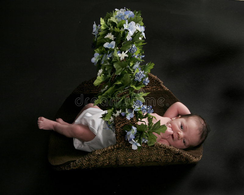 Download Basket Of Joy Royalty Free Stock Photo - Image: 856125