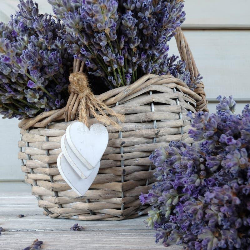 Basket of lavender stock image