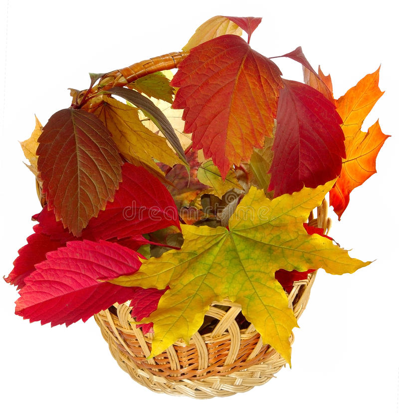 Basket With Leaves Stock Photography