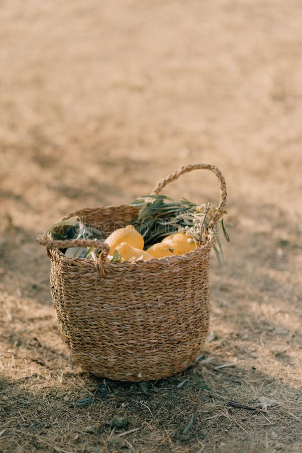 A Basket with lemons royalty free stock photography