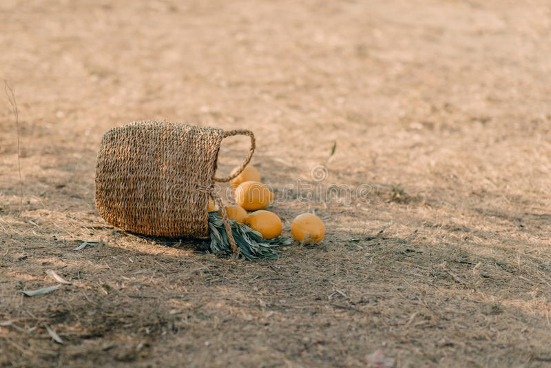 Basket with lemons royalty free stock photography