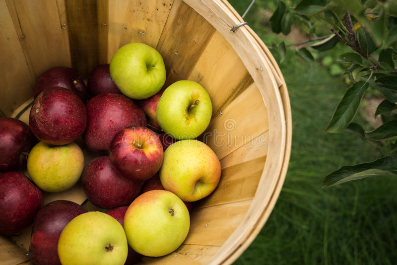 A basket of multicolored apples stock photos