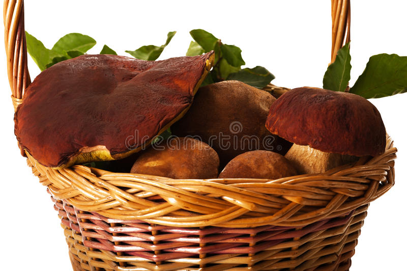 Download Basket with mushrooms stock photo. Image of mushroom - 20323916