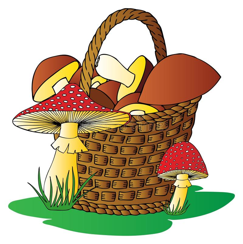 Download Basket with mushrooms stock vector. Image of organic - 24372742