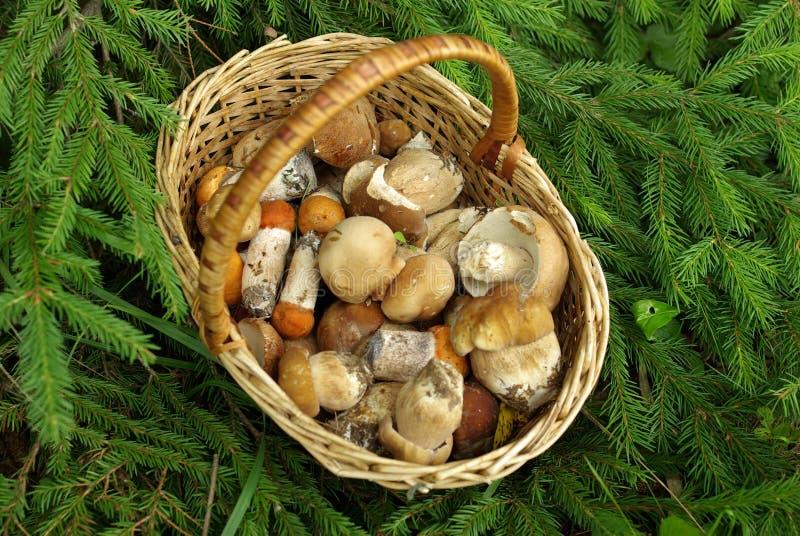 The basket of mushrooms