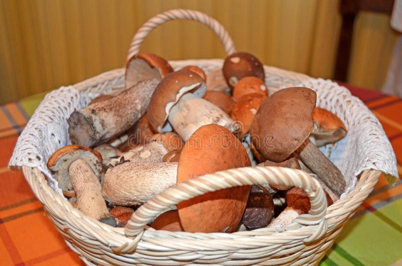 Basket with mushrooms stock images