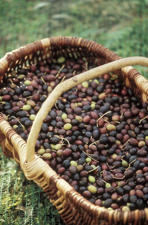 Basket of olives