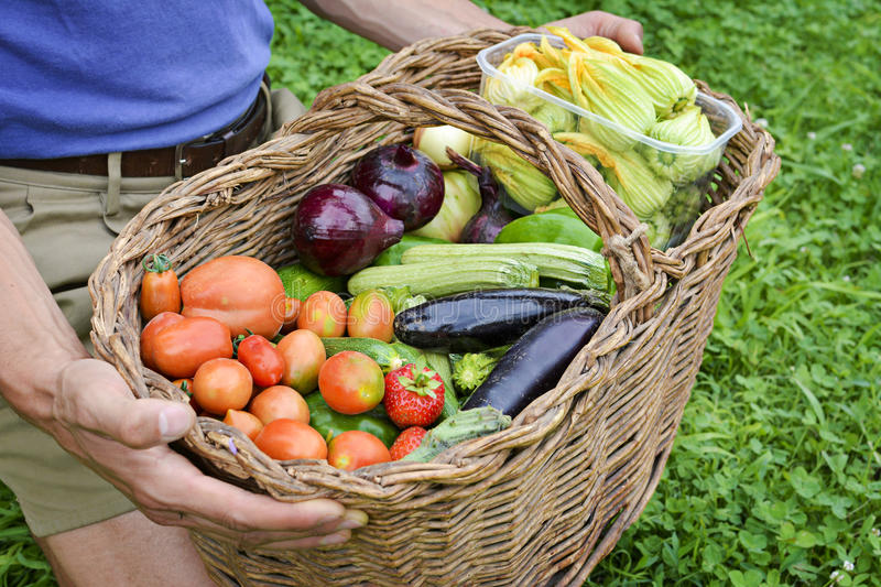 Download Basket Of Organic Vegetables Stock Image - Image of nature, agriculture: 43015113