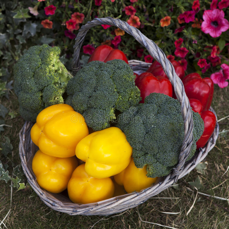 Basket With Pepper Stock Images