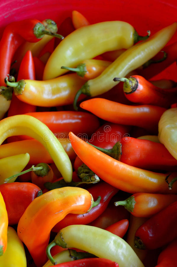 Basket of Peppers royalty free stock photography