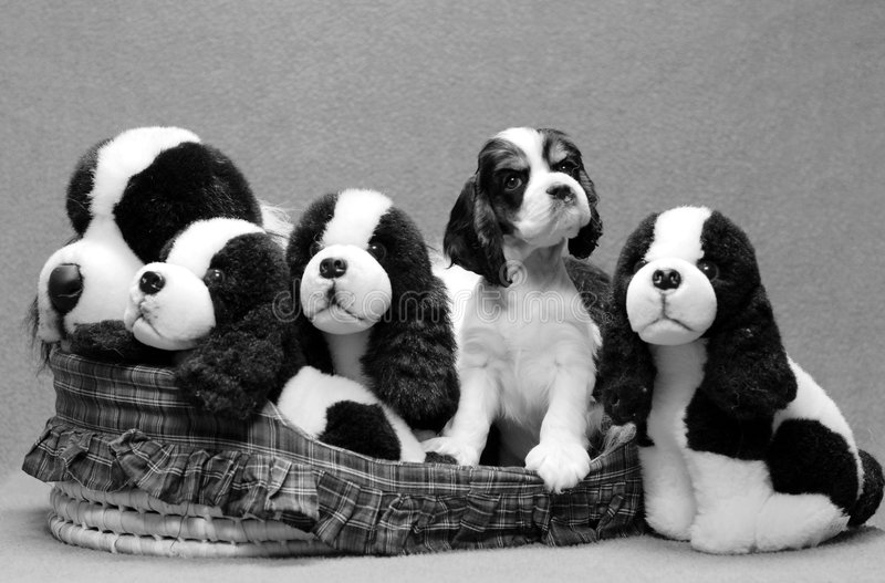Basket of puppies royalty free stock photography