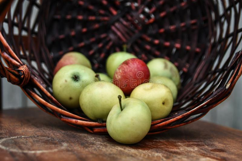 Basket with ripe fresh apples on an old chair. Harvest royalty free stock photo