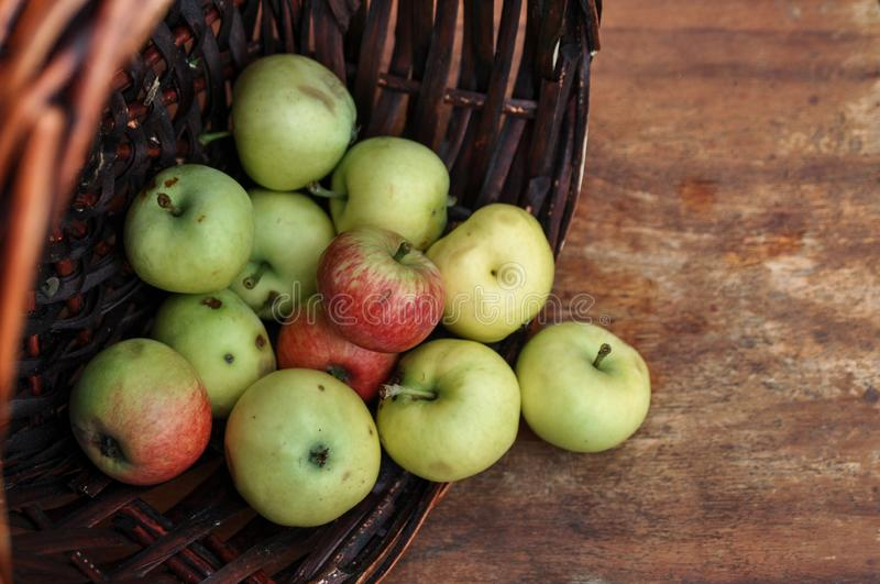 Basket with ripe fresh apples on an old chair. Harvest stock photography