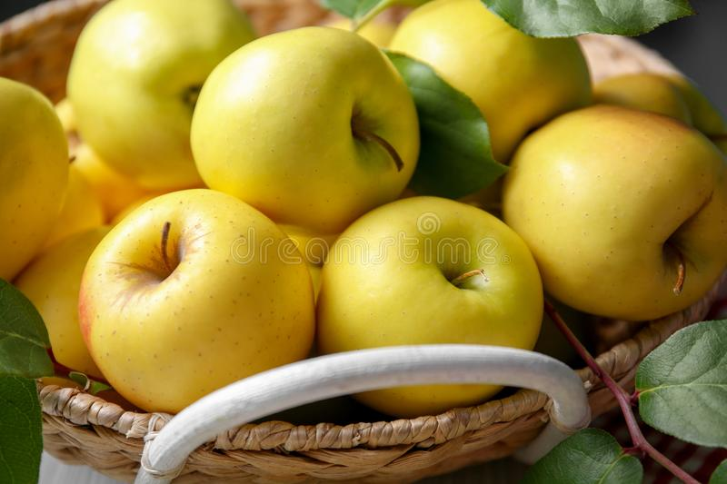 Basket with ripe yellow apples royalty free stock image