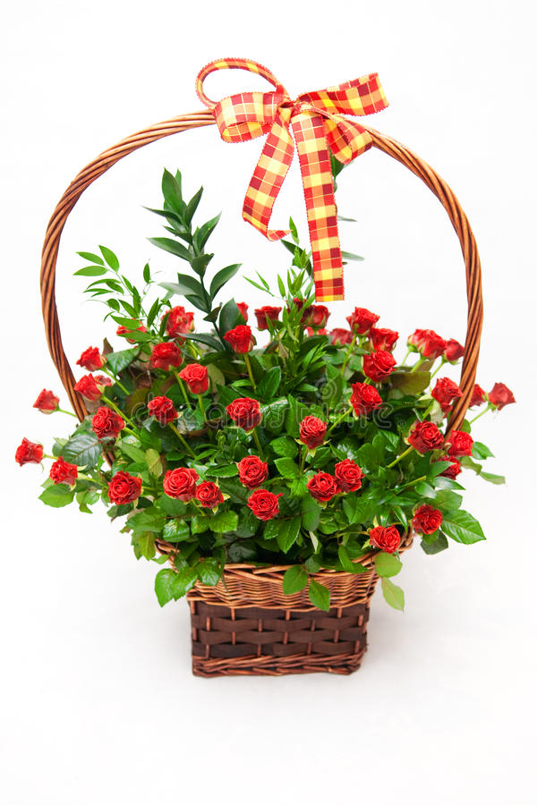 Basket of roses. Basket of red roses on the white background stock photos