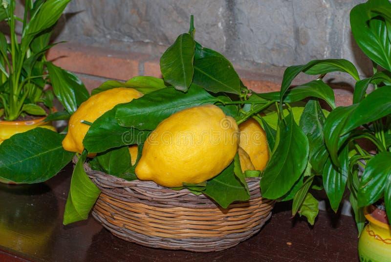 Basket of Sorrento`s yellow lemons stock photography