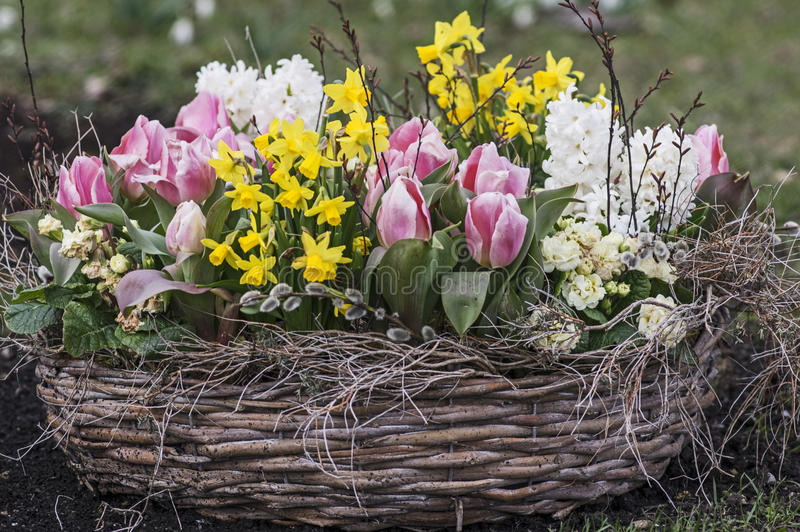 Basket with spring flowers royalty free stock image