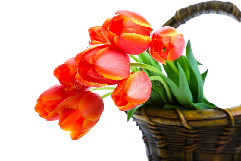 Basket of Tulips royalty free stock images