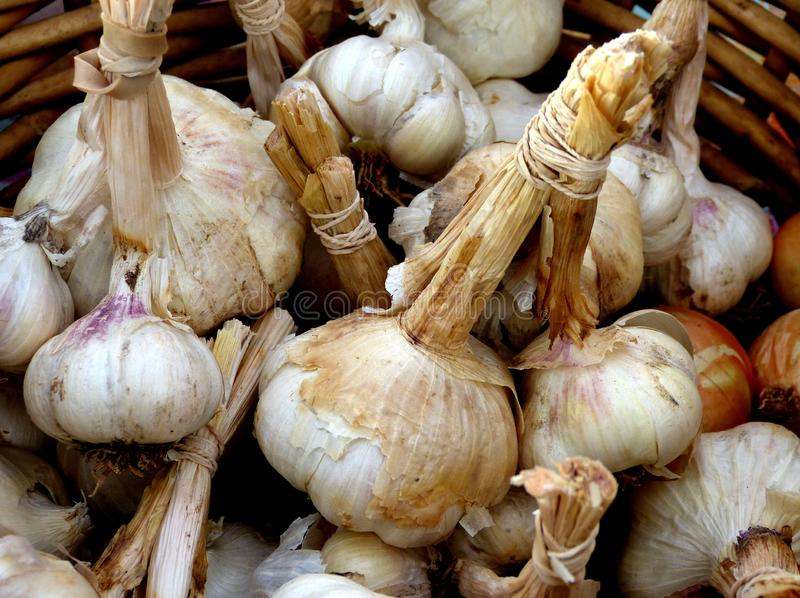 Softneck Dried White Garlic stock photography