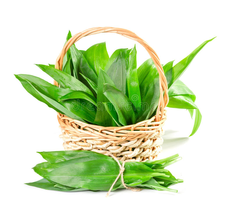 Basket with wild garlic leaves royalty free stock photography