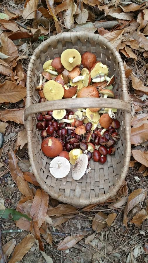 Basket of wild mushrooms and chestnuts stock images