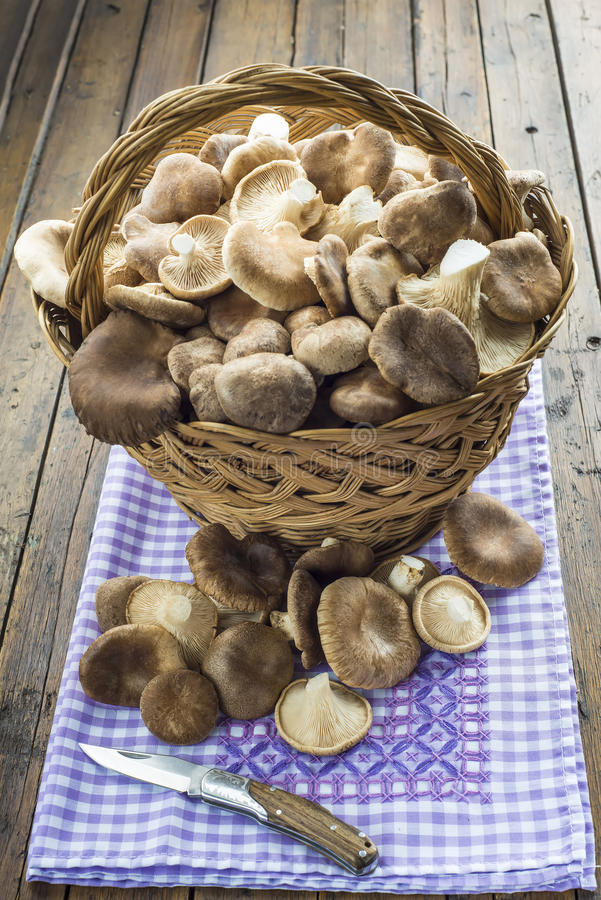 Basket with wild oyster mushrooms. On the table of the kitchen stock images