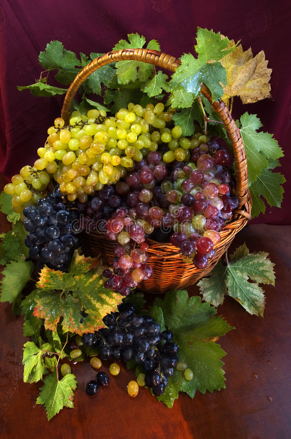Free Basket With Grapes Stock Photo - 343360