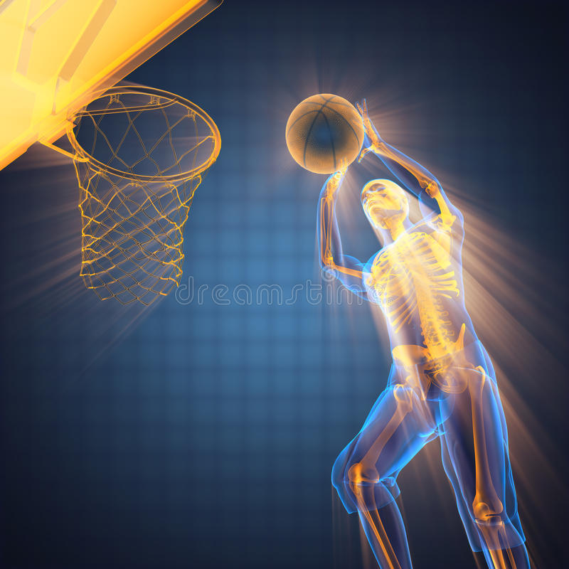 Basketball player bones radiography. 3D rendered stock images
