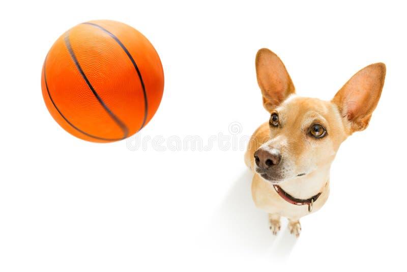 Basketball player dog stock photography