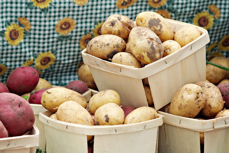 Download Baskets of Potatoes stock photo. Image of vegetable, russett - 21192454