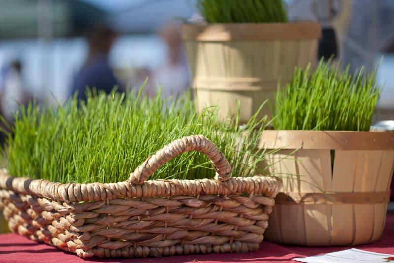 Baskets Of Wheatgrass. Baskets holding wheatgrass at the farmer's market royalty free stock photos