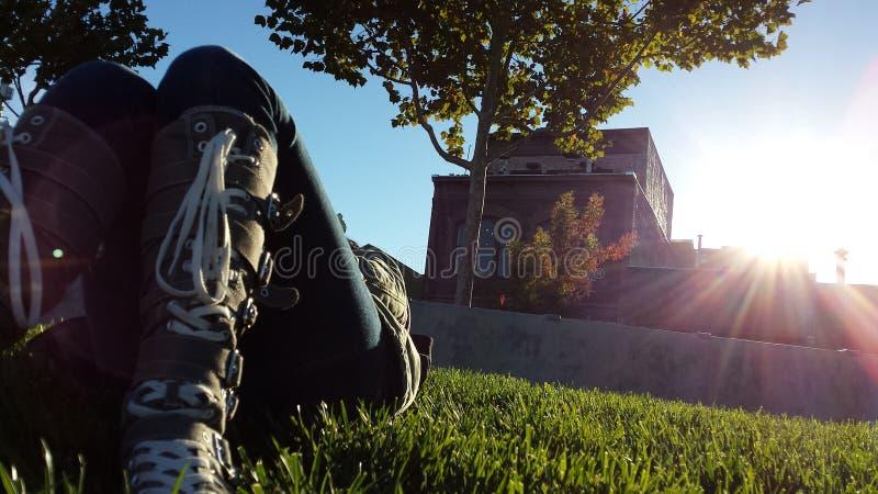 Basking no sol foto de stock royalty free