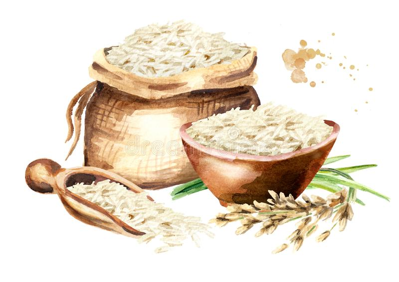 Basmati σύνθεση ρυζιού Συρμένη χέρι απεικόνιση Watercolor, που απομονώνεται στο άσπρο υπόβαθρο ελεύθερη απεικόνιση δικαιώματος