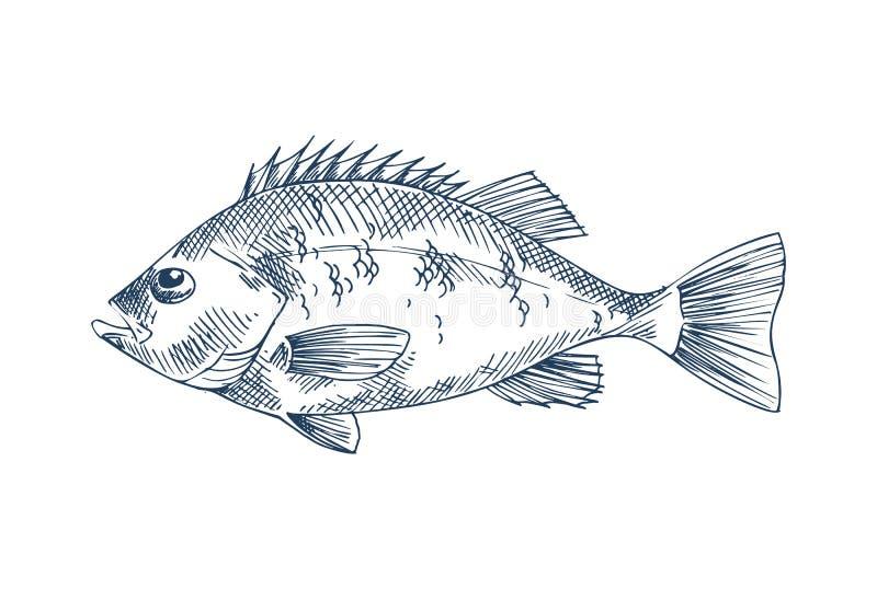 Basowego owoce morza wektorowa monochromatyczna ilustracja ilustracji