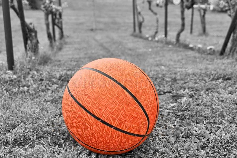 Basquetebol alaranjado no prado, imagem colorida preto e branco fotografia de stock royalty free