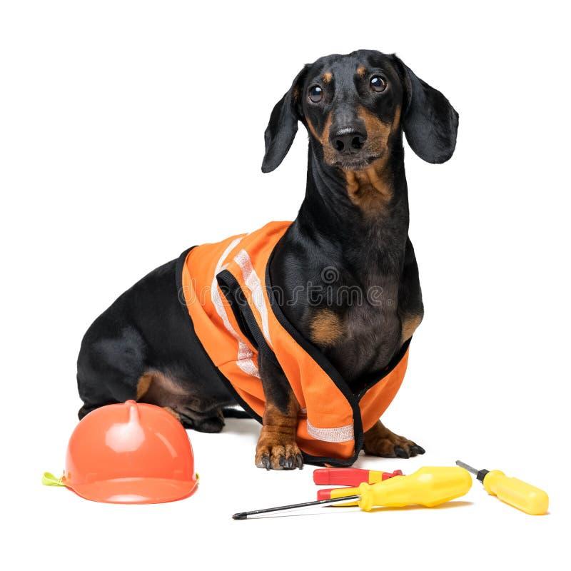 Bassê do construtor do cão em um capacete alaranjado da construção com as várias ferramentas chave de fenda da construção, alicat imagens de stock royalty free