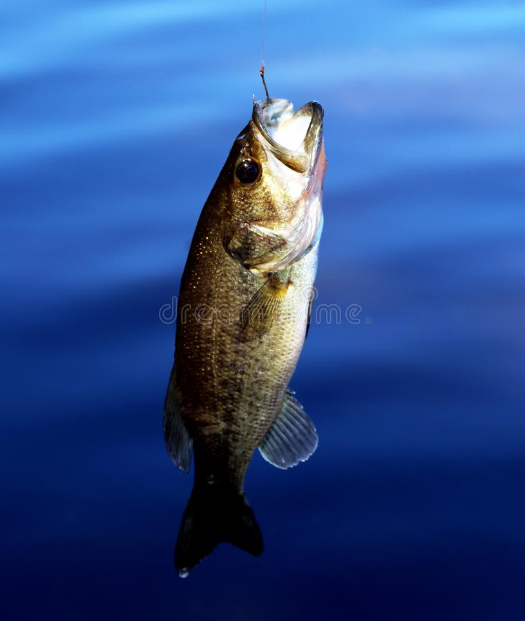 Bass à crochet image libre de droits
