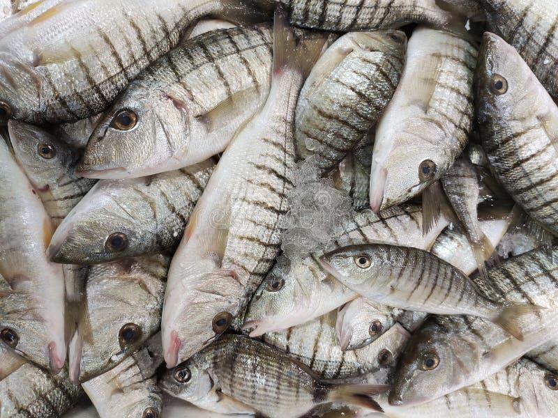 Bass del mare strappato nel contatore dei pesci fotografia stock