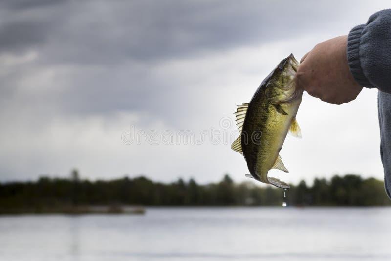 Bass Fishing nel Minnesota del Nord fotografia stock
