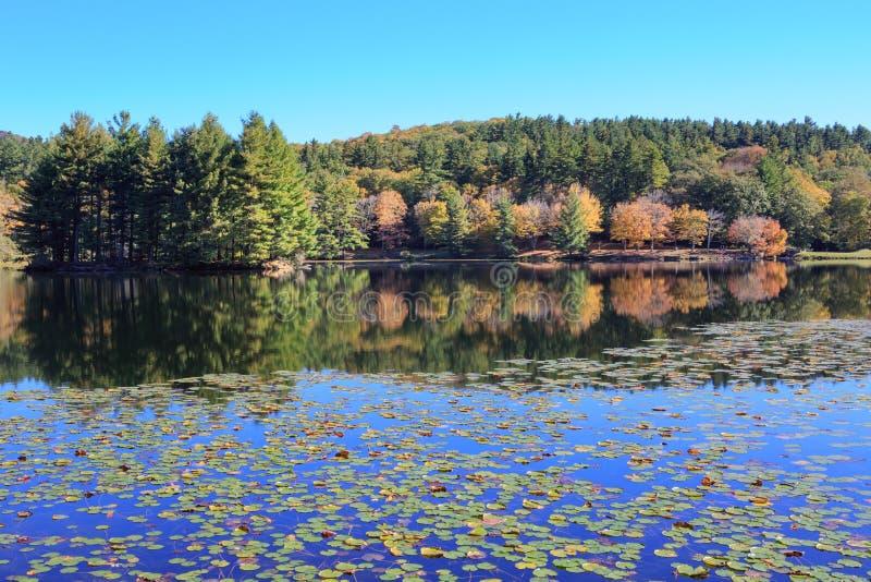 Bass Lake Blowing Rock North Carolina Autumn arkivfoto