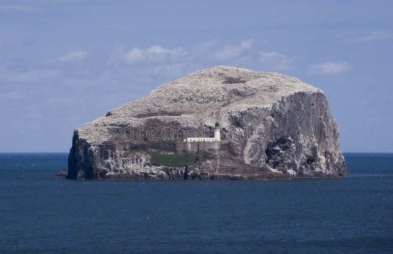 Bass Rock. The island of Bass Rock in East Lothian, Scotland stock photos