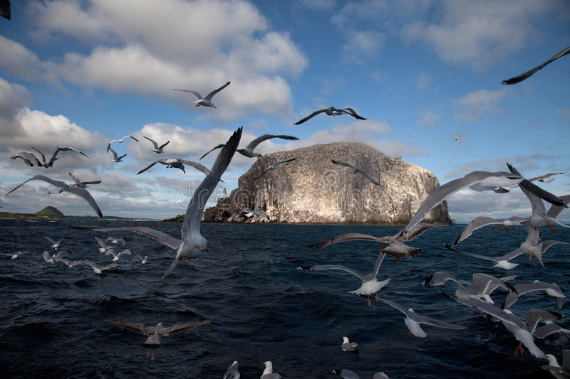 Bass Rock royalty free stock photo