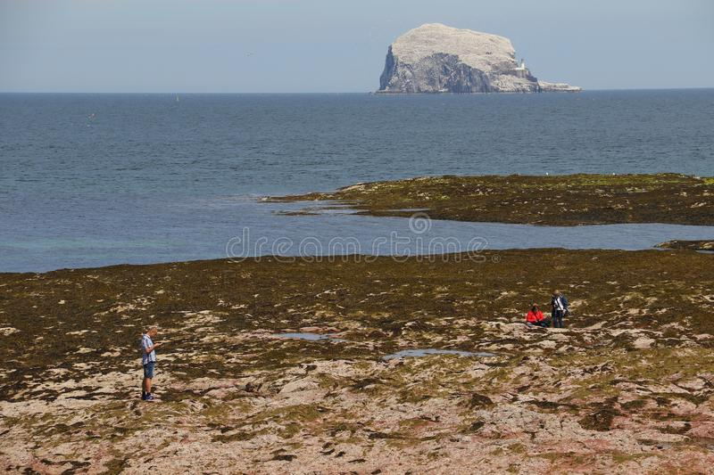 Bass Rock. View if the bass rock from North Berwick on the scottish coast by the north sea stock photo