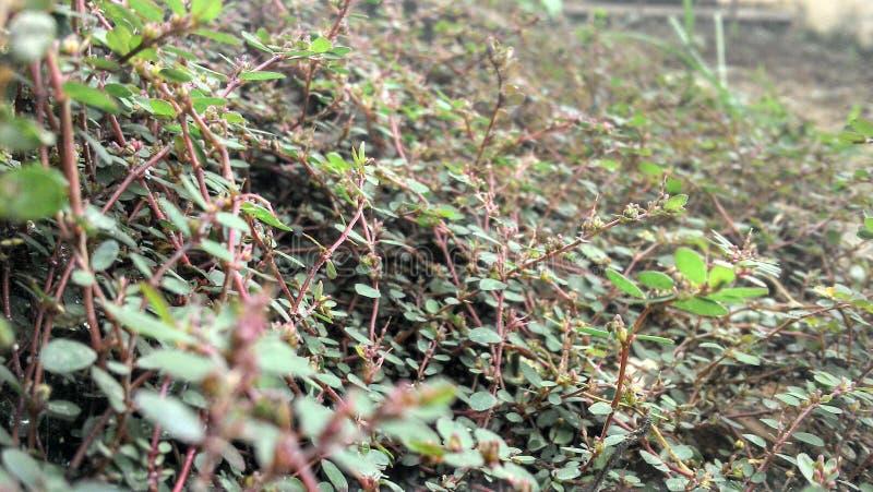 Basse vue de végétation très d'étroit image stock