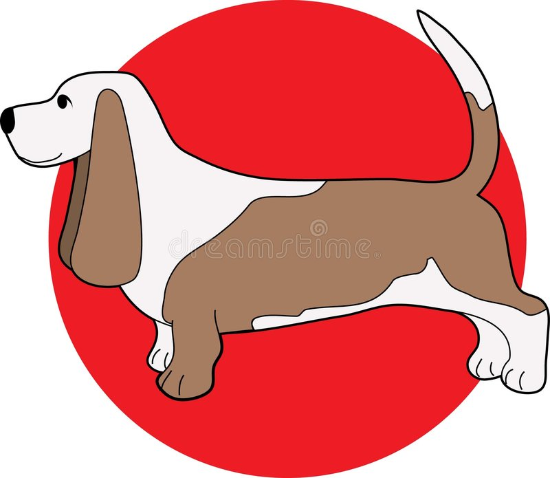 Basset Hound. On a red circle background stock illustration